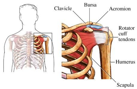 shoulder joint pain bsr simon