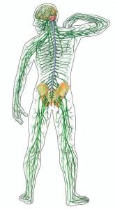 bodylink_nerves
